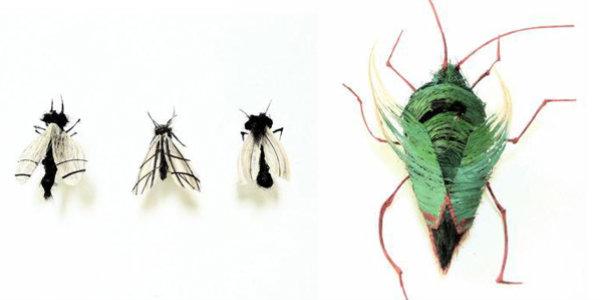 insetos_de_cabelo2
