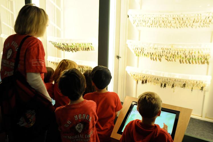 museu_insetos_borboletas-no-casulo
