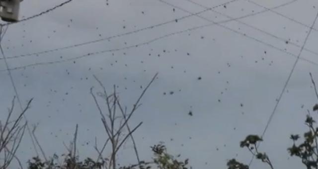 chuva_aranhas