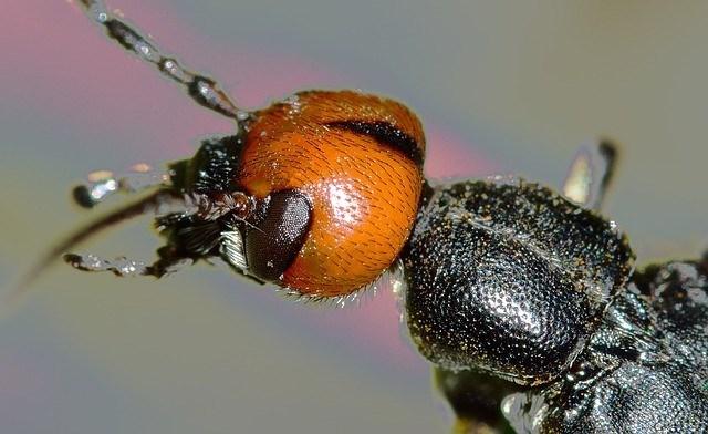 30115133619312-300x184 Você sabia que insetos também sofrem por causa do stress? Pragas