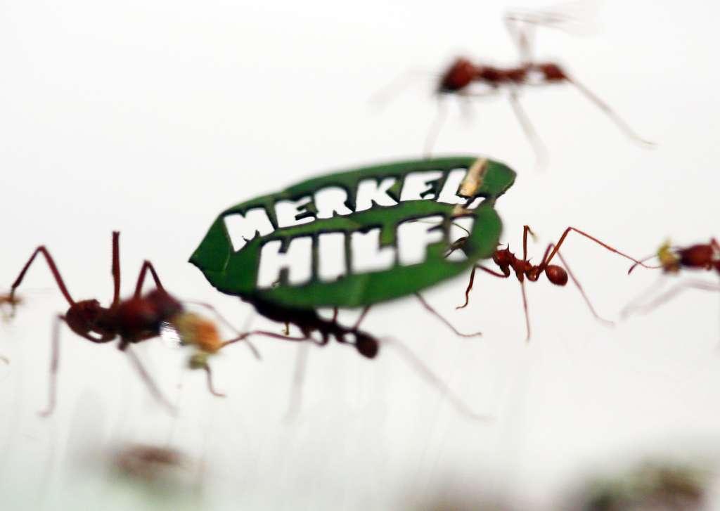 Formigas cortadeiras carregam uma folha cortada a laser com a frase '!Pro Amazonas!' no zoológico em Colônia, na Alemanha. As mensagens para proteger a floresta amazônica fazem parte de uma campanha do Fundo Mundial para a Natureza Selvagem (WWF) (Foto: Ina Fassbender/Reuters)