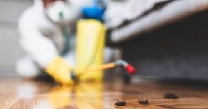 Dedetização – Veja como acabar com os pernilongos