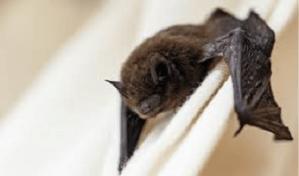 Maneiras de prevenir a proliferação de morcegos em residências