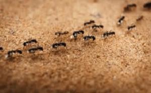 Dicas Para Evitar Formigas Em Casa