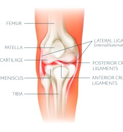 the anterior cruciate ligament acl is located in the middle of the knee forming part of the central pivot located within the notches of the femur  [ 1800 x 1006 Pixel ]