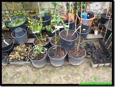 Overzicht van een paar planten in pot