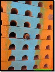 Nestkast bijen