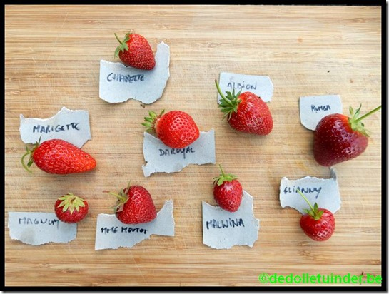 Testpanel aardbeien