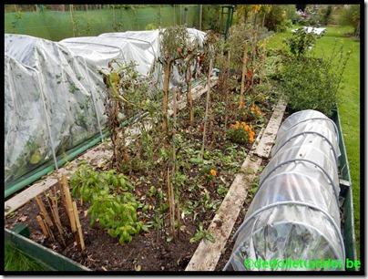 Einde tomatenplanten