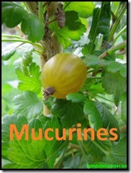 Kruisbes 'Mucurines'