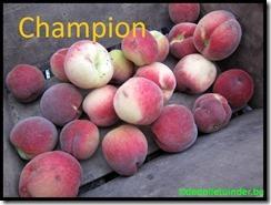 Perzik 'Champion'