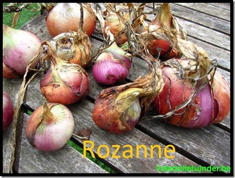 Ui 'Rozanne'