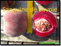 Sanguine de Savoie