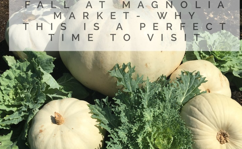 Fall At Magnolia Market- Why This Is A Perfect Time To Visit