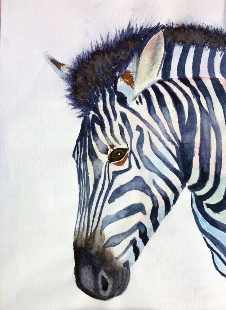 zebra_LRB