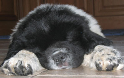 Dice-asleep-cropped