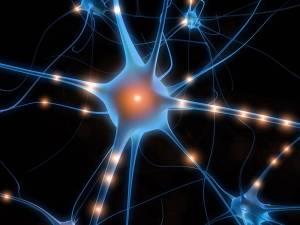 quantum-consciousness