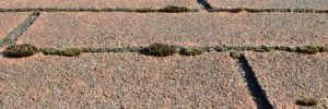 Removing Moss and Algae From Your Roof