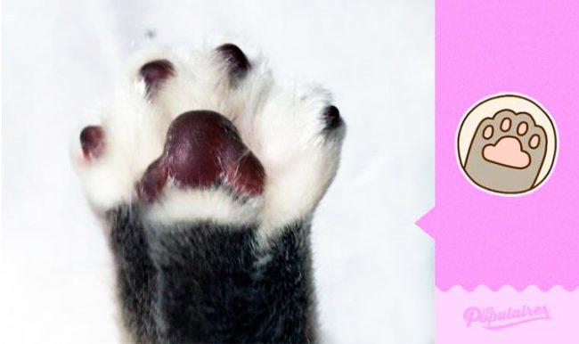 Julien-Therrien-Pusheen-the-Cat-10