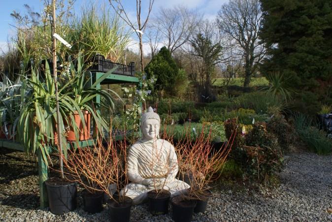 A view of Deelish Garden Centre