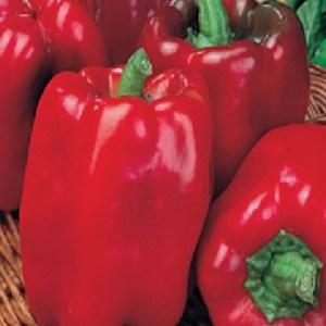 Pepper Quadrato d'Asti Rosso