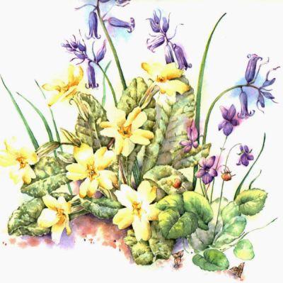 Wildflower Mix, Woodland
