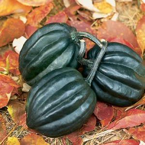 Pumpkins & Gourds 'Tuffy'