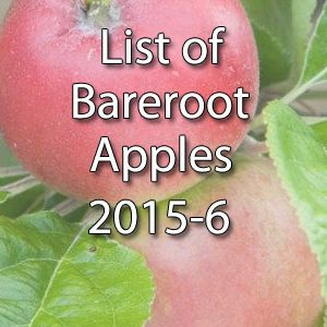 Bareroot Apple Varieties 2015-6