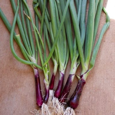 Onion, 'Red Baron'