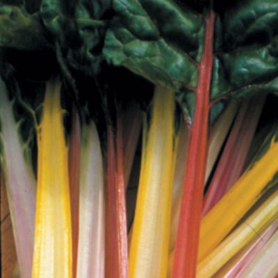 Leaf Beet, Rainbow Chard