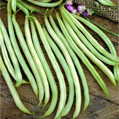 Beans - Dwarf French 'Slenderette'