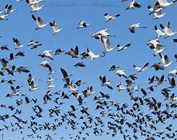 file migration