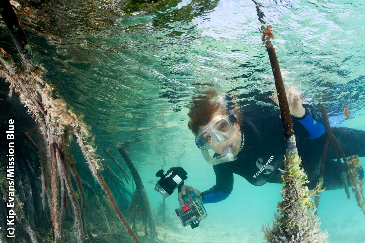 We take a look at 'the hero of the planet.'. Her Deepness Dr Sylvia Earle To Host Underwater Kelp Forest Livestream This Weekend Deeperblue Com