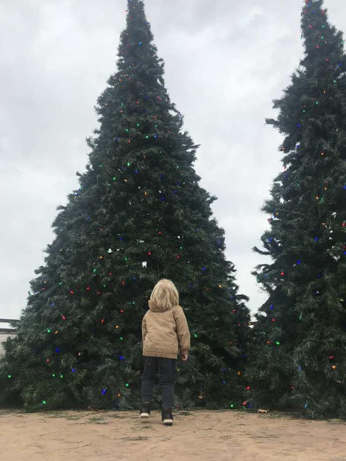 M's third Christmas