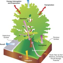 Forest Canopy Diagram Briggs And Stratton Ignition Wiring How Do You Calculate Stormwater Credits For Trees? Part 1: Why Tree-based Are Hard To ...