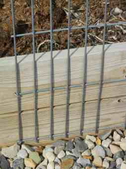 """Building A Strong Wind & Weather-Resistant Trellis, young cucumbers, baby cukes, garden, gardening, vining squash, spines on cucumbers, climbing vines, grow cantaloupes, melons, squash, gourds, climbing roses, vegetables grow upright, staking, vining plants, heavy guage, cattle panels,Gurney seeds, 'Straight Eight', cucumbers, pole beans, strong plants, honeydew, cantaloupe, heavy fruit, butternut, easy picking, easy harvest, disease resistant, archway, arch, panel arbors, shady arbor,garden, gardening, 3"""" galvanized or exterior nails to fasten down"""