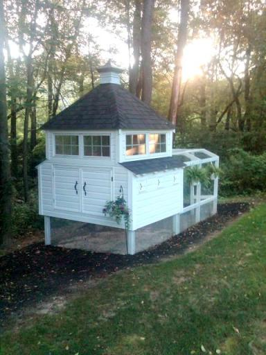 chicken coop, backyard living ideas, your own eggs
