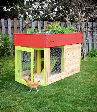 chicken coop in backyard, egg box, planter on top