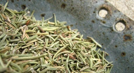 dried rosemary herb, spice, health benefits, Bulk Herb Store
