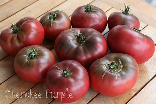 Tomatoes With Funny Names & Their Fascinating Stories, Siberian, purple, striped, unusual tomatoes, Black From Tula, Pink Oxheart, Pink Ponderosa, San Marzano, Malakatovoya Shkatulka, open-pollinated, heirloom, Chocolate Striped, Brandywine, Cherokee Purple, Sweet 100, tomato teepees, wall-o-water, season extenders, cloches, wind protectors, smaller garden, seed starting, seed saving, paste tomato, beefsteak tomato, Russian, Malachite box, heirloom tomatoes, unusual varieties, yellows, purples, green, pink, red, black, odd names, weird names, greenhouse, heaters, best tasting, tomato flavor, photos, open-pollinated