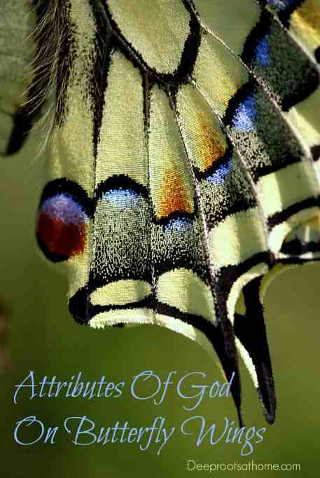 Attributes Of God On Butterfly Wings, look closely, like begets like, creativity, nature, God, diversity, Creation, details, slow down, evidence, eyes to see, microscopic, chicken eggs, wonder, olive eggs, blue eggs, green eggs, Alphabet, numerals, intricacy,Anthocharis cardamines, National Geographic, Kjell Sandved, photography, butterflies, moths, butterfly alphabet, letters, A through Z, variety, created, Creator, Holy Spirit, insect wings, image, likeness, magnification, electron microscope, Isaac Newton, Opticks, quote, art, artist, butterfly wings, scales, Papilio machaon, entomology,