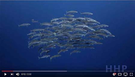 Fishing in Cancun-deep sea fishing cancun video