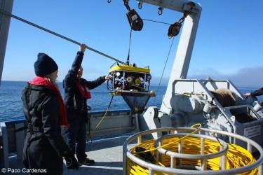 The ROV bringing back some specimens of Geodia barretti