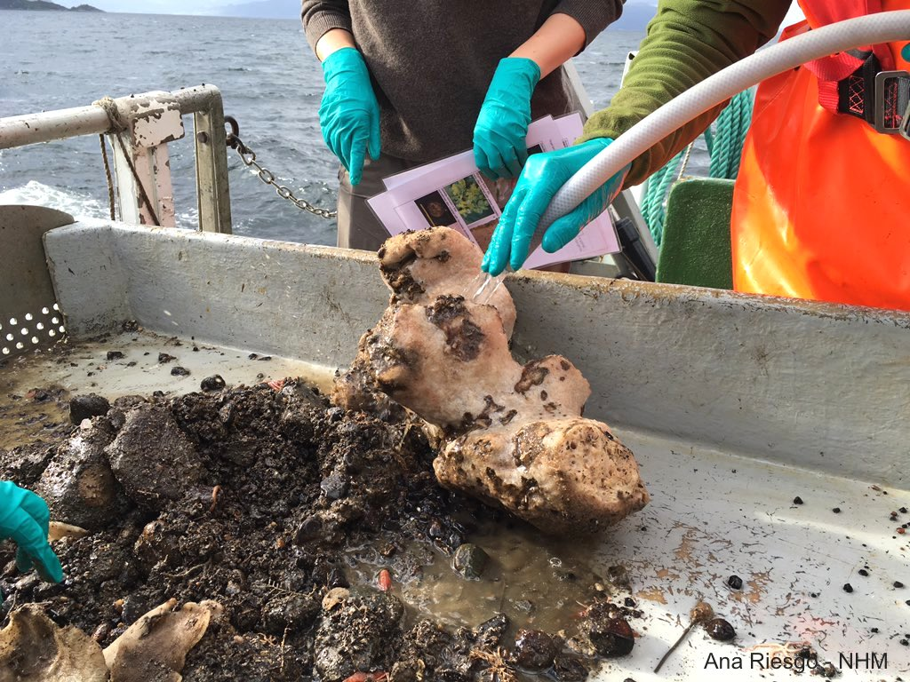 Washing deep-sea Porifera during a short cruise in Norwegian fjords