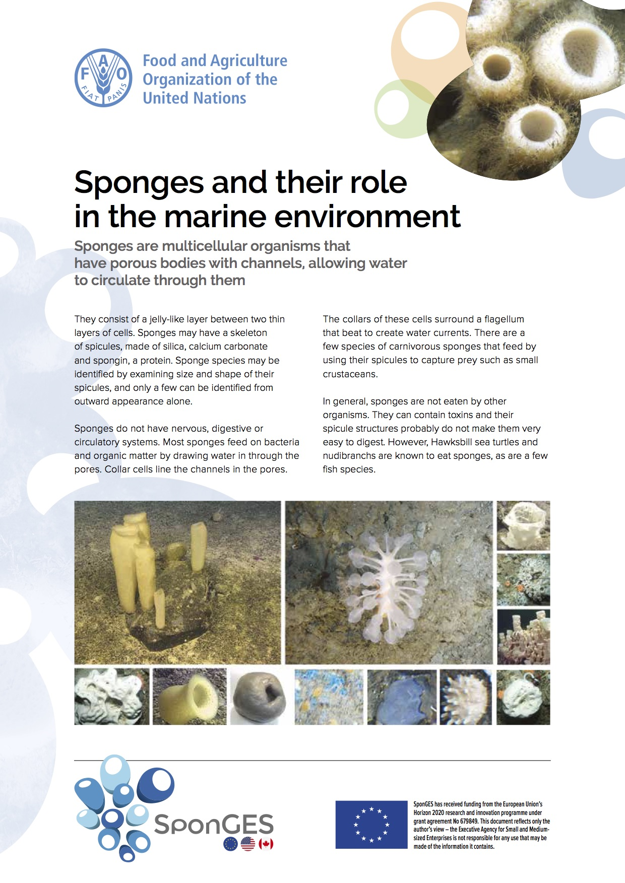 SponGES FAO role of sponges