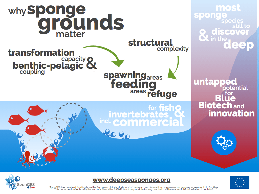 SponGES infographic fact sheet