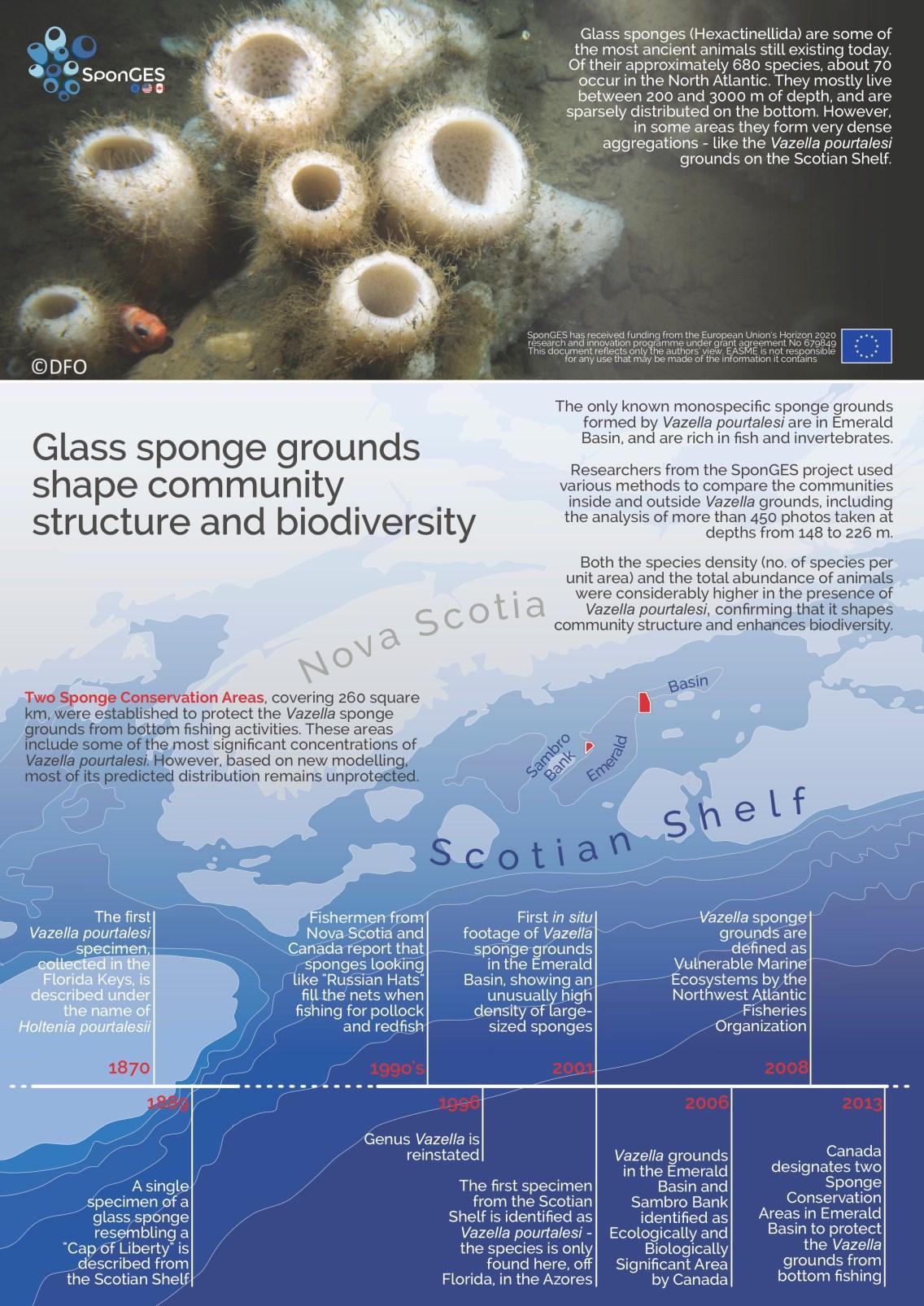 SponGES infographic deep sea