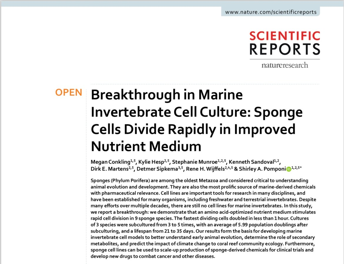 New paper in Scientific Reports present groundbreaking discovery in the quest for marine invertebrate cell cultures