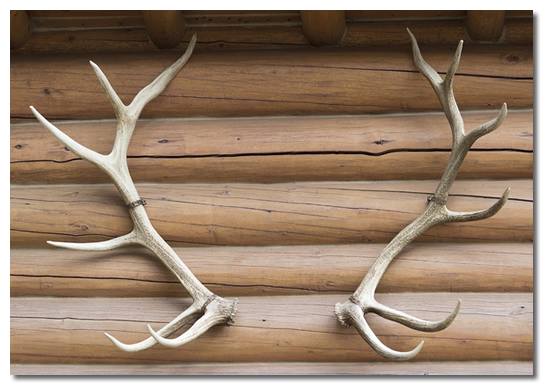 Using Deer Antlers To Achieve A Rustic Home Decor