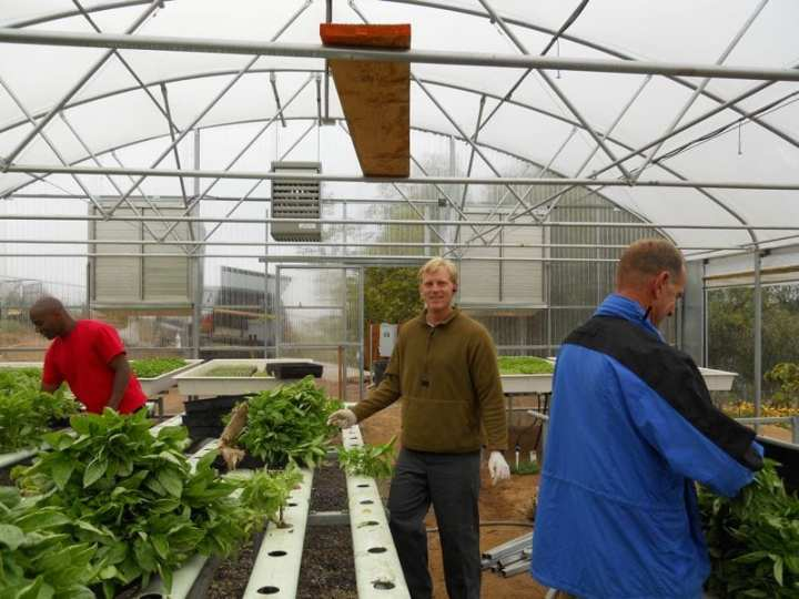 Veterans Cory Pollard, left, Colin Archipley, center, and veteran and farmer Robert Cogill harvest basil in a greenhouse at Archi's Acres, an organic farm in Valley Center, Calif. Archipley and his wife, Karen, own the farm where they conduct a training program for veterans and active-duty service members, Veterans Sustainable Agriculture Training (VSAT). Photo courtesy of Archi's Acres